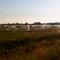 Cranberry bogs near Derby Reach